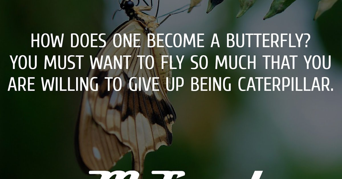 How does one become a butterfly? You must want to fly so much that you are willing to give up being a caterpillar – Trina Paulus