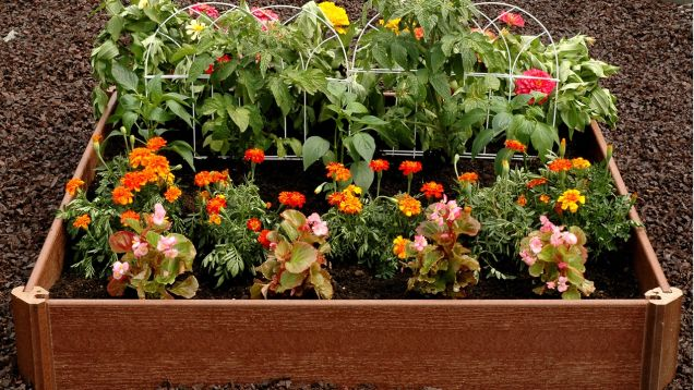 Grow Your Own Herbs and Vegetables In This $20 Garden Bed