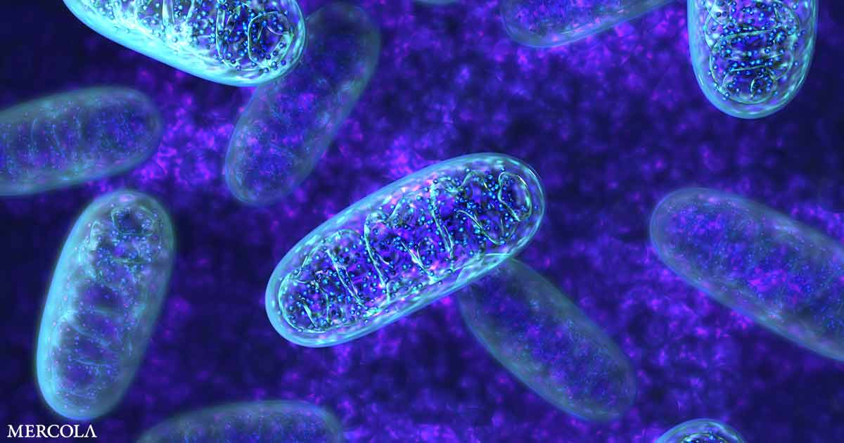 Top Tips to Optimize Your Mitochondrial Health